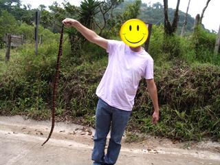king-snake-monteverde