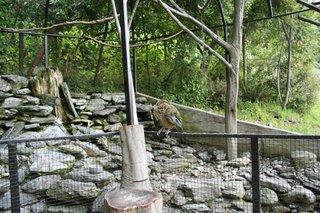 Walk in Aviary, Kiwi Birdlife Park, Queenstown