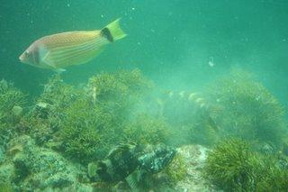 Milford Sound - Underwater Center, New Zealand