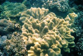Yalong Bay Coral Reef