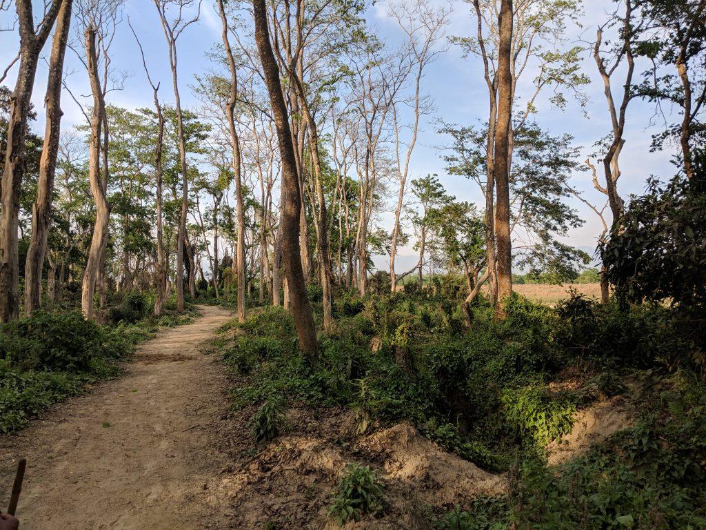 Chitwan National Park - Rhino Apple Trees