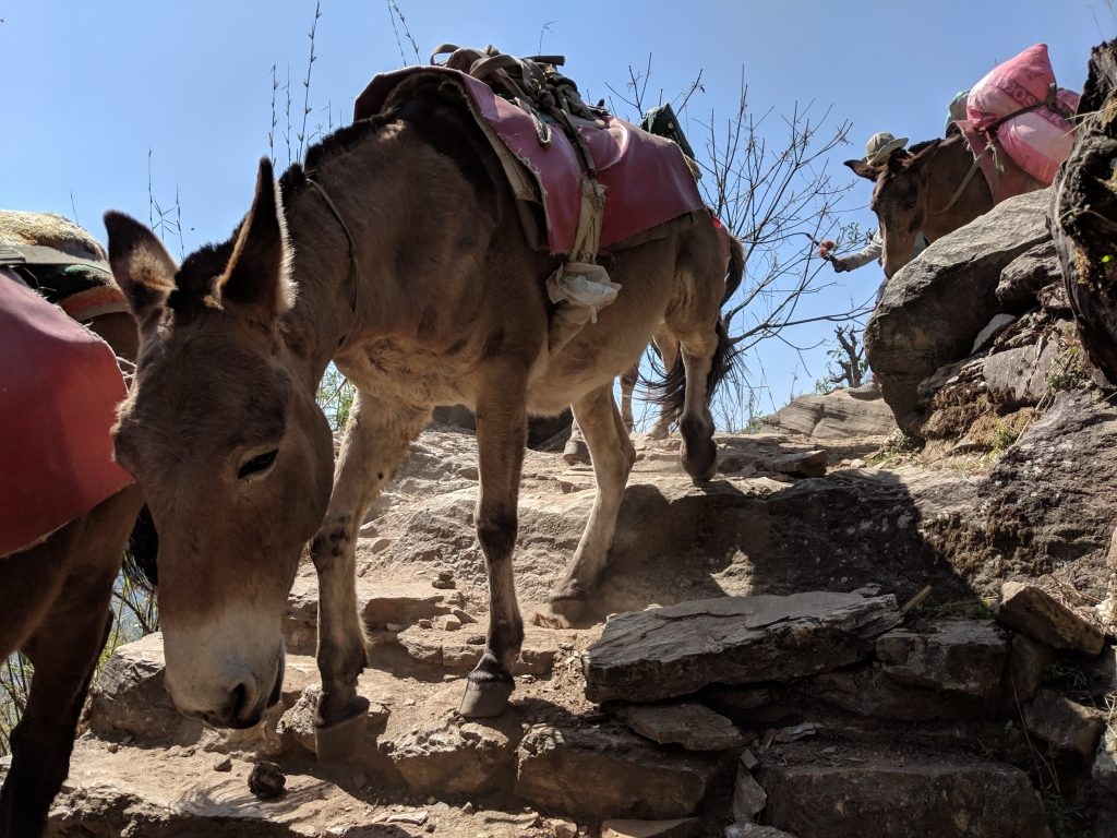 Mules on the steps from Jinhundanda to Chomrong