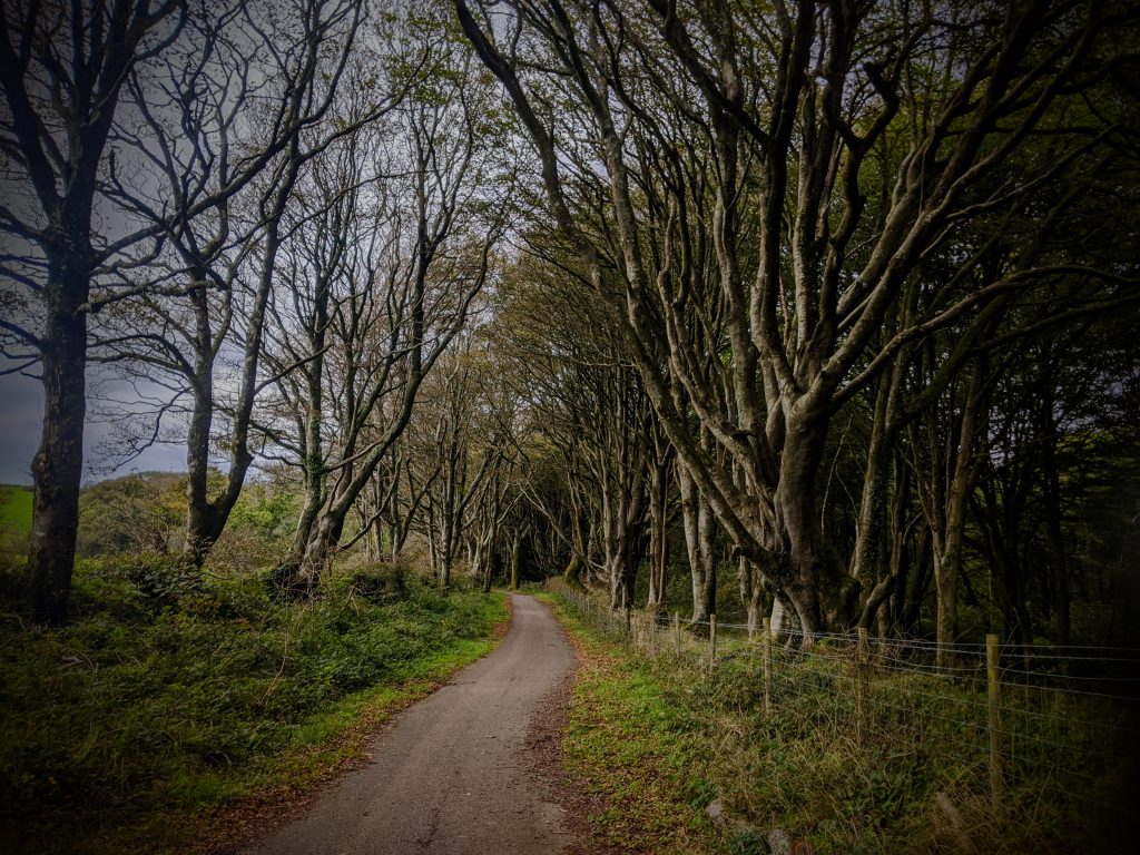 HaverfordWest to Milford Haven cycle path