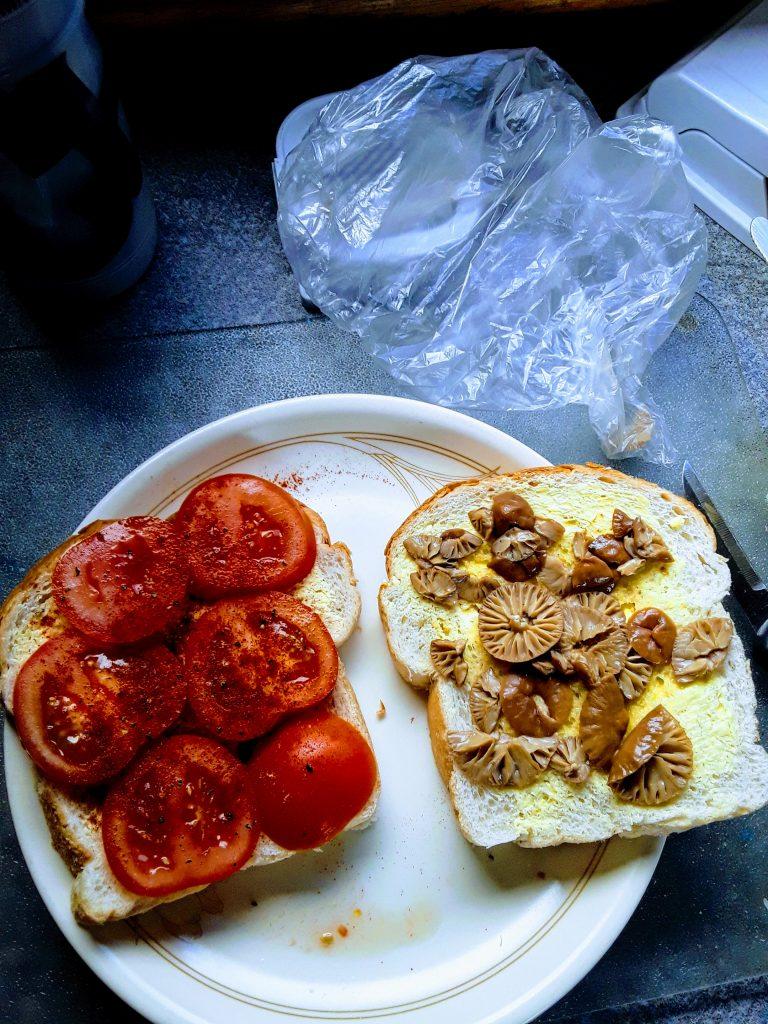 Fairy ring mushroom and tomato sandwich, 9/08/2019