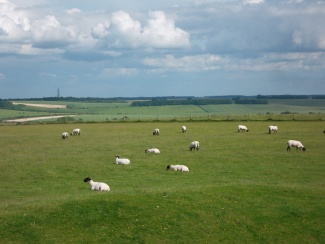 Uffington Sheep_7439683028_l.jpg