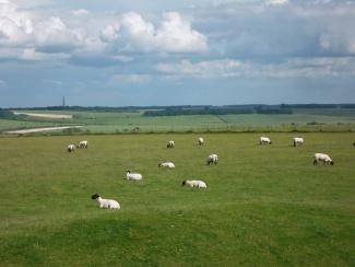 Uffington Sheep_7439683028_l.jpg