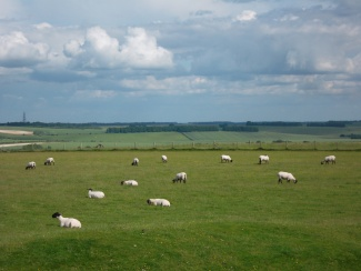Uffington Sheep_7439696780_l.jpg