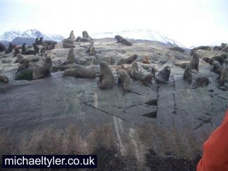 Seals in Ushuaia - Bealge Channel_3003768570_l.jpg