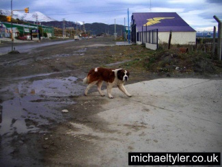 Ushuaia - St Bernards_3002933363_l.jpg